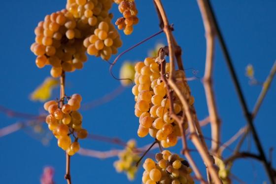 Винодельня на Халкидики